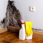 Store fordele forbundet med professionel håndtering af skimmelsvamp
